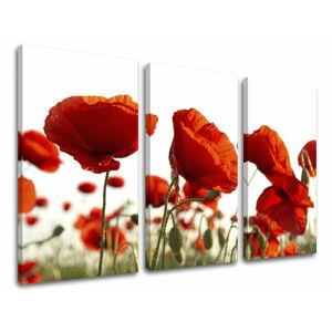 Obraz na stenu 3 dielny KVETY XOBKV118E30 (moderné obrazy na plátne)